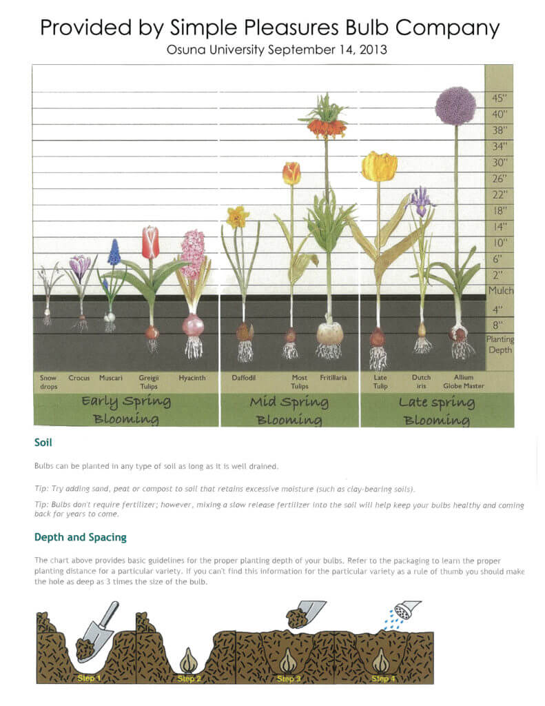 Fall Bulbs Planting Guide by Simple Pleasures