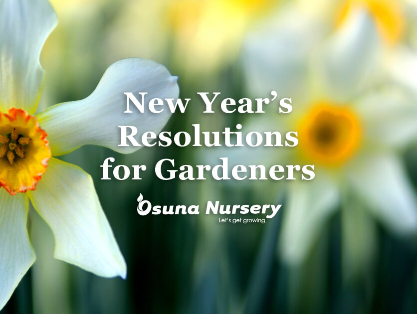 New Year's Resolutions for Gardeners