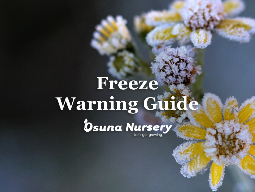 Freeze Warning Guide