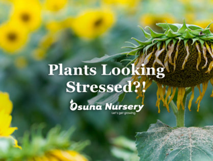 Plants Looking Stressed?!