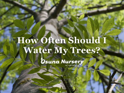 How Often Should I Water my Trees?