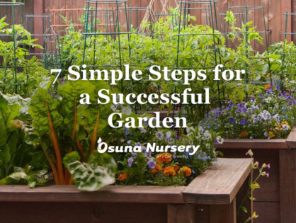 7 Simple Steps for a Successful Garden