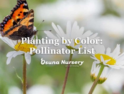 Planting by Color