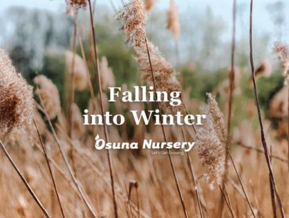 Falling into Winter