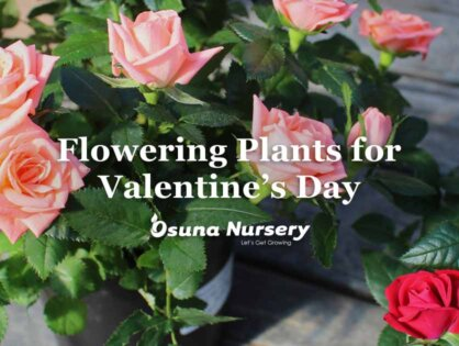 Flowering Plants for Valentine's Day