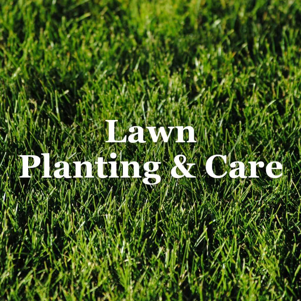 Lawn Planting & Care